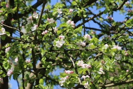 <p>bloesem in het voorjaar</p>